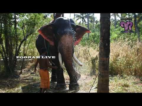 മച്ചാട് ധർമന്റെ ഒരു അടാർ കുളിസീൻ MACHAD DHARMAN ELEPHANT BATH