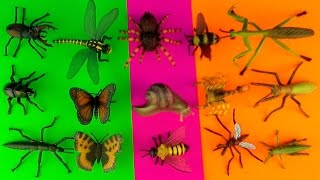 INSECTS - Box 18 TOY COLLECTION Tarantula Scorpion Stag & Rhino Beetles Kids Toys SuperFunReviews