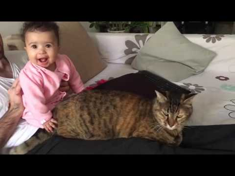 Baby attacks cat with Outrageous cuteness