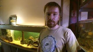 Очень нужна помощь в распродаже коллекции рыб! Хозяин в реанимации. Рыбы в Харькове