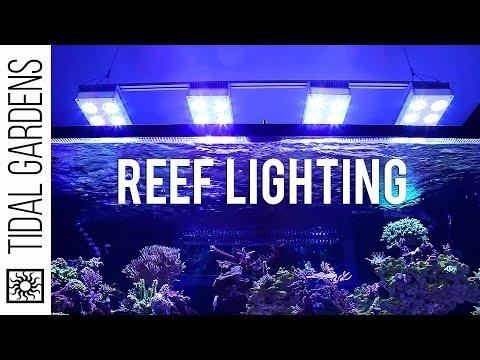 The Deep Dive into Reef Aquarium Lighting