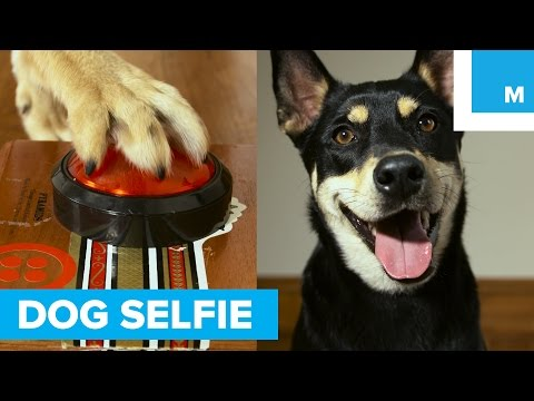 Teach Your Dog to Text Selfies