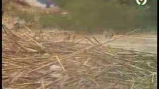Se hunde el puente del rio Girona en Beniarbeig