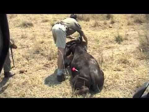 Wildlife Rescue in Zimbabwe