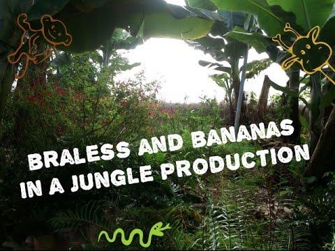 Organic Fruit Farm (Finca Biológica) La Palma