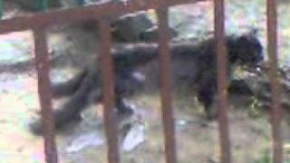 Одна Кошка - Два Хвоста.3gp