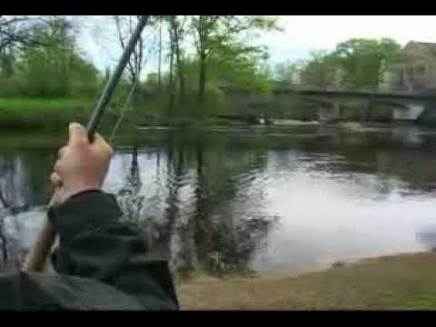 Fighting a fresh baltic salmon in river Morrum