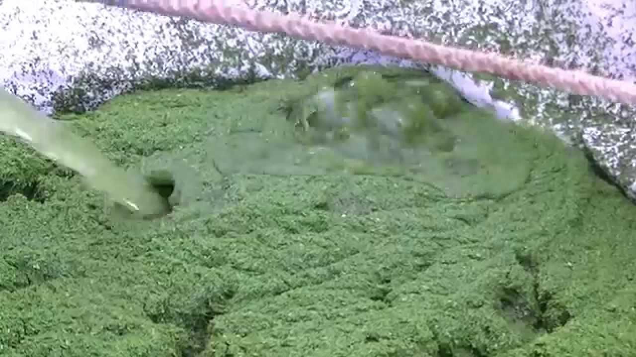 le skimcrush pour pompage lentilles d 39 eau par armorvif