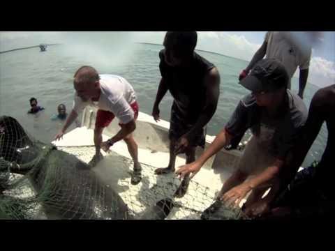 Belize Manatee Captures