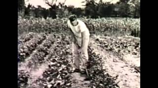 The Gardens of Victory (WWII film)