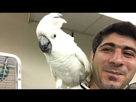 Volunteer at Exotic bird rescue😍😍😍