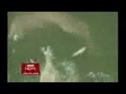 Baiji Dolphin: Extinct