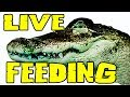 Zoo Tour LIVE | Jay's Field Trip, Feeding GATORS and MONITORS 2017