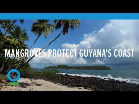 Guyana Needs Mangroves to Protect its Coast