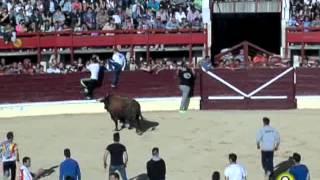 Toro de la Feria 2014 - Gavilán - Medina del Campo