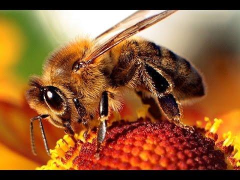 How Accurate Is USDA Honeybee Health Survey?