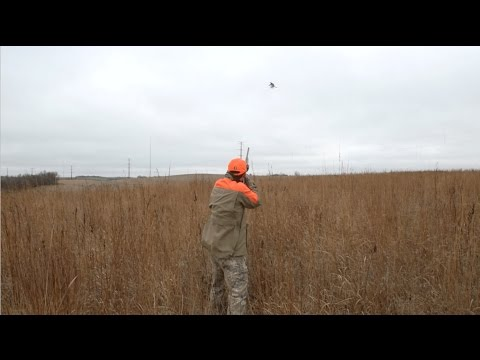 Be A Better Blocker On Pheasants In Open Country