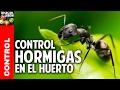 Como eliminar hormigas del jardin @cosasdeljardin