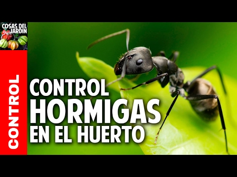 5 fertilizantes con cascara de platano potasio mas for Como acabar con las hormigas del jardin