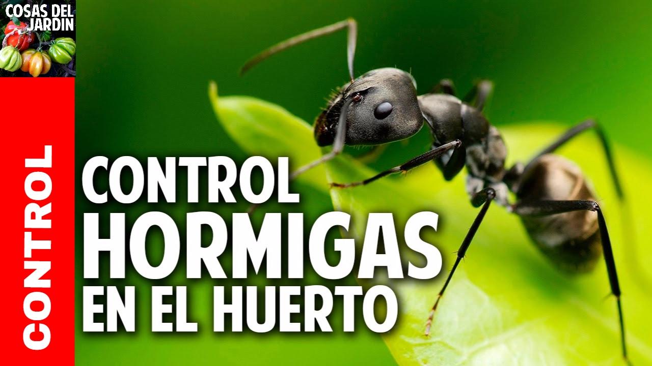 Como eliminar hormigas del jardin @cosasdeljardin - YouTube