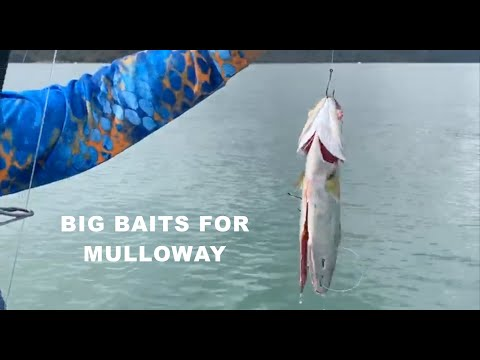 BIG BAITS FOR MULLOWAY | ESCAPE FISHING WITH ET