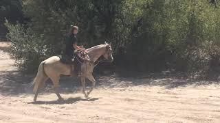 Pony Boy Trail