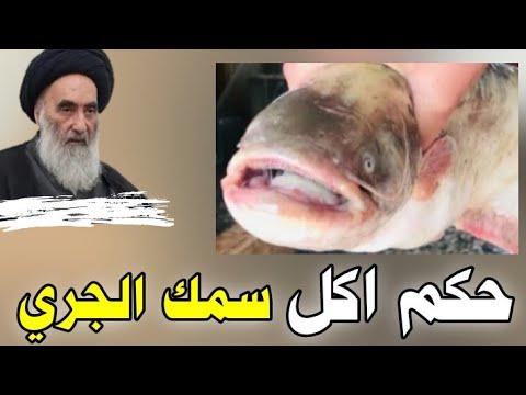 هل حلال أكل سمك الجري عند السيد السيستاني Youtube