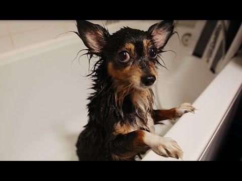 Banfield Pet Hospital – How to Give Your Dog a Bath