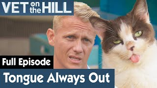 🐱 This Cat Always Has Its Tongue Out | FULL EPISODE | S02E09 | Vet On The Hill