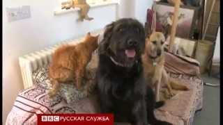 Соревнование самых старых котов в мире - BBC Russian
