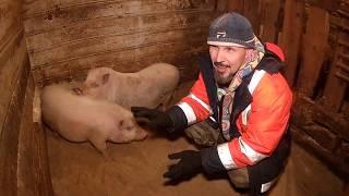 Прорубь или как приручить свинью \\ В деревню!