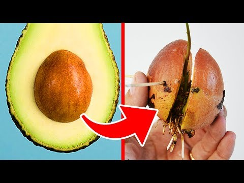 Top 10 Superfoods That Are Actually SUPER!!!