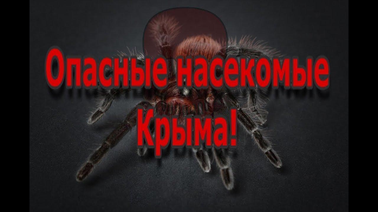 6 жутких, опасных насекомых Крыма!