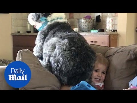 Упорно куче кое сака да си го добие своето место