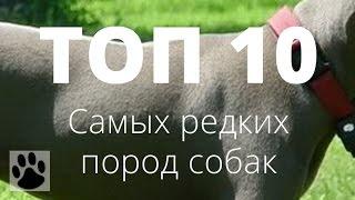ТОП 10 самых редких пород собак