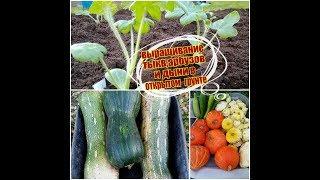 АРБУЗЫ, ДЫНИ,ТЫКВЫ: Посадка и выращивание в открытом грунте.СЕКРЕТЫ хорошего урожая. Московская обл.