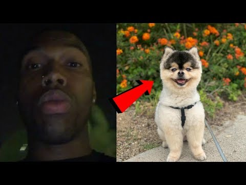 Daniel Sturridge Offers Big Reward After Dog Taken From LA Home