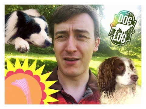 Shady - A Dog Log Vlog