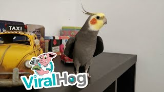 Can You Guess This Popular Television Theme? || ViralHog