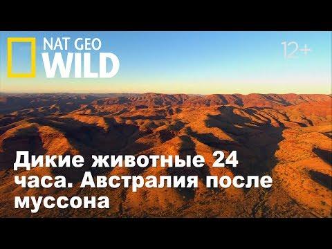 Nat Geo Wild: Дикие животные 24 часа. Австралия после муссона / Wild 24 - Видео онлайн