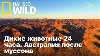 Nat Geo Wild: Дикие животные 24 часа. Австралия после муссона / Wild 24