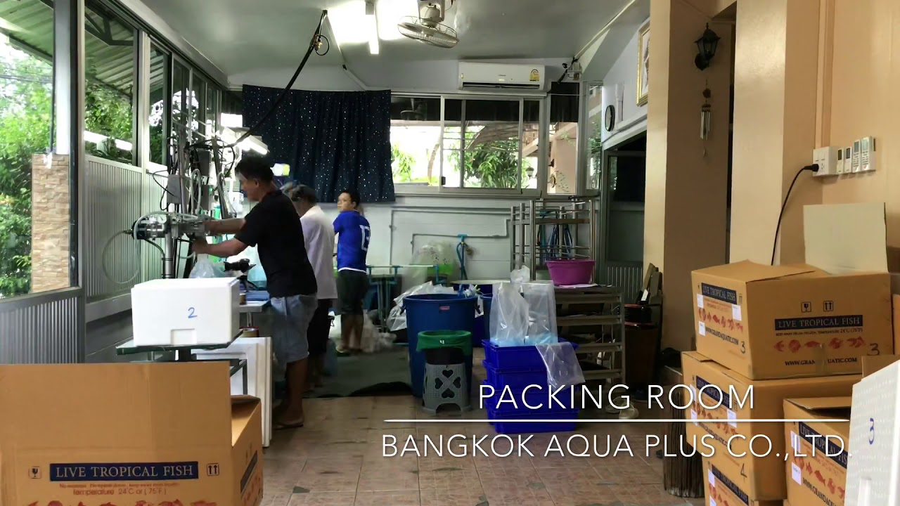 Grandaquatic - Freshwater Tropical Fish Exporter from Thailand