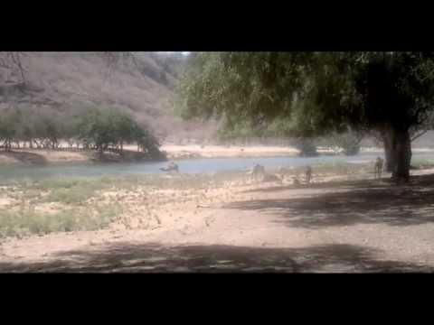 Trip to Dhofar (Oman)