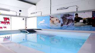 Canine Hydrotherapy Centre West Midlands - Bluewaters K9 Hydro