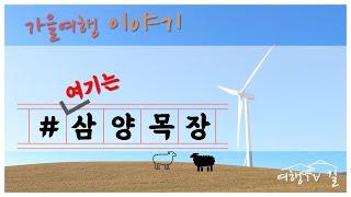 [여행TV 길] 가을여행 이야기 여기는 삼양목장 | 1…