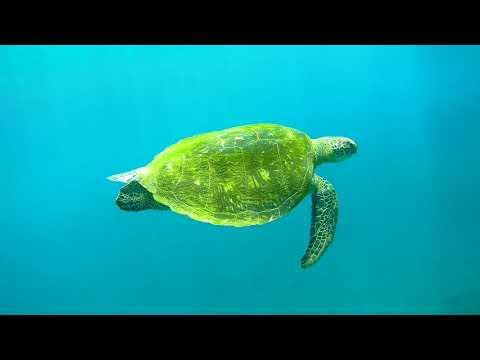 Ternate dive trip & dive schools
