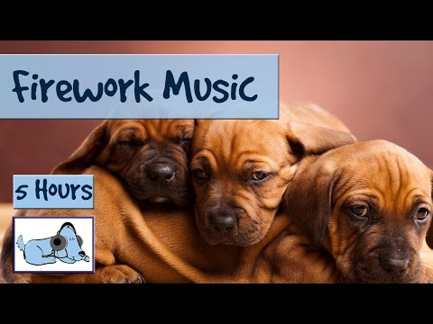 5 Hours of Music to Calm Down Dogs, Perfect During July 4th Fireworks