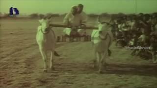 Dasari Narayana And Vinod Thrilling Bull Race Scene - O Thandri O Koduku Movie Scenes