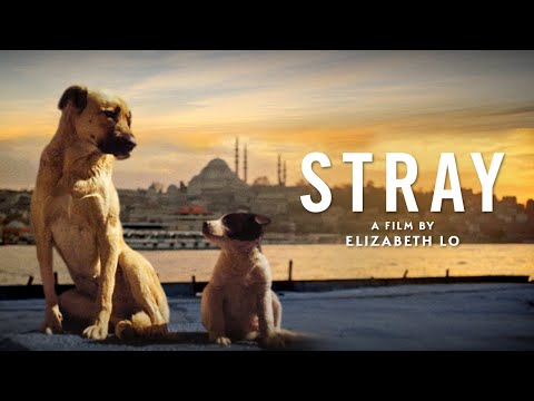 Stray - Official Trailer
