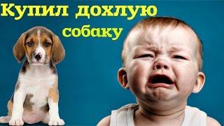 Cами с усами купил дохлую собаку на барахолке